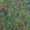 'Pardillos en un manzano' 2012 · Óleo sobre lienzo · 85x61