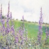 'Campo con flores' 2001 · Óleo sobre lienzo · 65x100 · Colección particular
