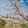 'Cerezos en flor' (Valle del Jerte) 2010 · 81x100 · Óleo sobre lienzo · Colección particular