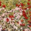 'Flores silvestres' 1994 · Óleo sobre lienzo · 46x65 · Colección particular