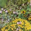 'Girasoles' 2008 · Óleo sobre lienzo · 33x41 · Colección particular