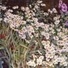 'Jardín' 2003 · Óleo sobre lienzo · 65x81 · Colección particular