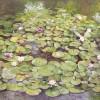 'Nenúfares' 2001 · Óleo sobre lienzo · 130x195 · Colección particular