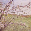 'Paisaje con almendro' 1997 · Óleo sobre lienzo · 65x81 · Colección particular