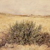 'Paisaje con romero' 1997 · Óleo sobre lienzo · 81x100 · Colección particular