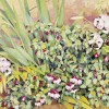 'Plantas' 2002 · Óleo sobre lienzo · 46x65 · Colección particular